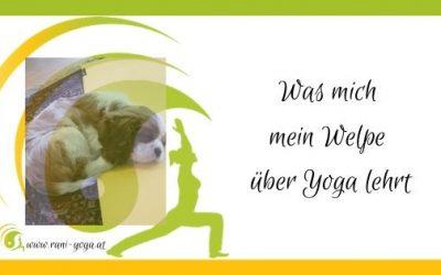 Was mich mein Welpe über Yoga lehrt – Yoga mit Hund